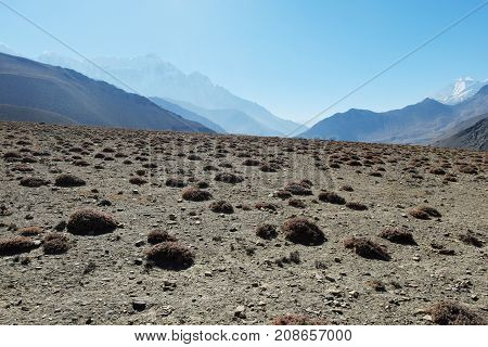 Mountain stony plateau with islands of vegetation with snow-capped mountains in a haze on the background