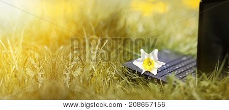 Flower and laptop - online learning concept