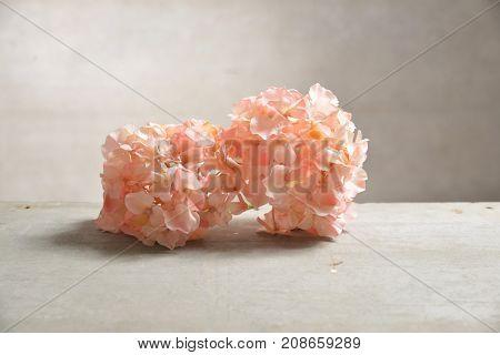 Bouquet of hydrangea, on gray background