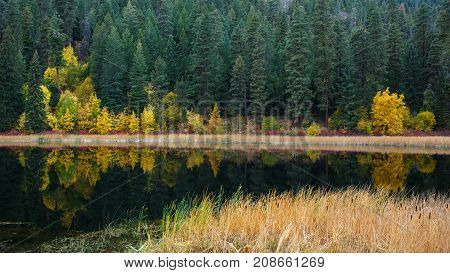 A quiet mountain lake with cattails along the shoreline showing reflection of Autumn colors mixed with evergreen trees from the forest hillside background.