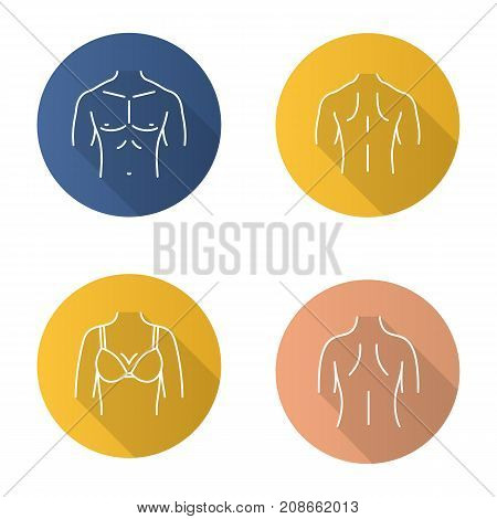 Body parts flat linear long shadow icons set. Male and female backs muscular torso woman's breast. Vector outline illustration