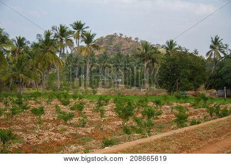 Landscape shot of the Southern Indian countryside