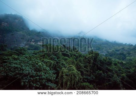 Srilankan landscape with tropical mountain forest covered with misty clouds