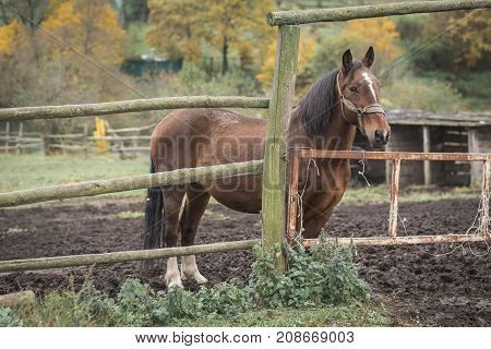 A brown horse stands in the stable
