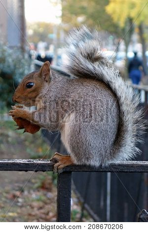 squirrel new york usa city harlem bronx .