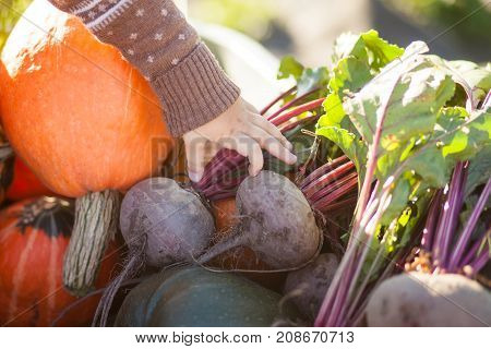 Closeup. Child Hand And Harvested Different Vegetables, Autumn Day