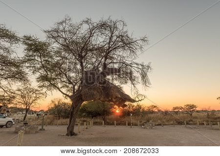 ETOSHA NATIONAL PARK NAMIBIA - JUNE 23 2017: Sunrise at the camping sites in the Okaukeujo Rest Camp in the Etosha National Park. A sociable weaver nest is visible