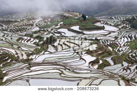 Terraced Rice Fields In Yuanyang County, Yunnan, China