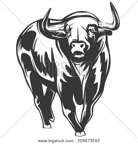 Bull Isolated On White