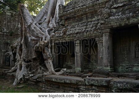 The Temple Ruins, Trees, And Its Root Attached To Its Wall In Angkor Wat, Cambodia
