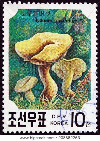 NORTH KOREA - CIRCA 1991: a stamp printed in North Korea shows Sweet Tooth Hydnum Repandum is an Edible Mushroom circa 1991
