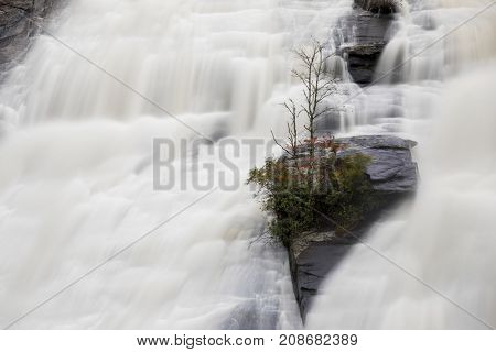 Rock with tree clinging tenaciously on a massive waterfall