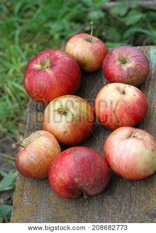 Bright ripe sweet apples close up outdoor