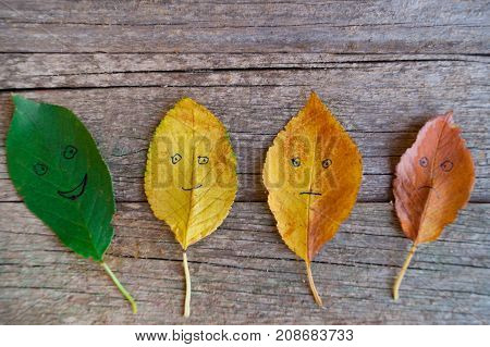 Four colorful autumn leaves with different emotions - happy glad indifferent sad on the wooden background.