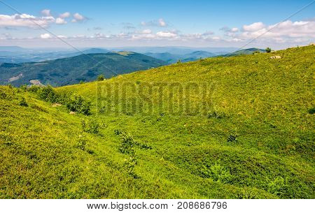 Grassy Meadow Of Mountain Ridge