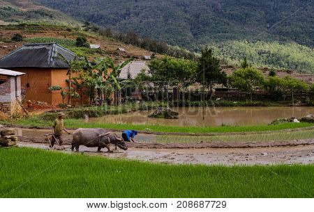 Rural Scenery In Sapa, Northern Vietnam