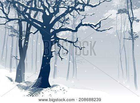 Forest in winter. Hand drawn vector illustration of a woodland scenery with grandiose oak tree and ferns in snowfall.