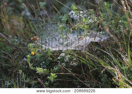 A spider web, in a field, is a device created by a spider, generally meant to catch its prey.