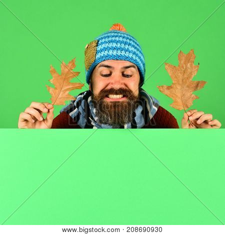 Man In Warm Hat Holds Oak Leaves On Green Background