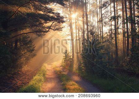 Autumn. Fall scene. Sunlight in autumn forest.