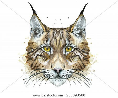 watercolor drawing of an animal predator mammal lynx with yellow eyes, portrait, head, for decoration and design, prince