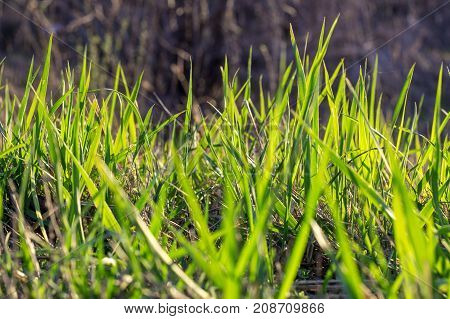 Shot of beautiful grass as a volume texture