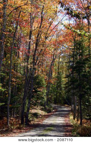 Autumn Road Acadia Maine