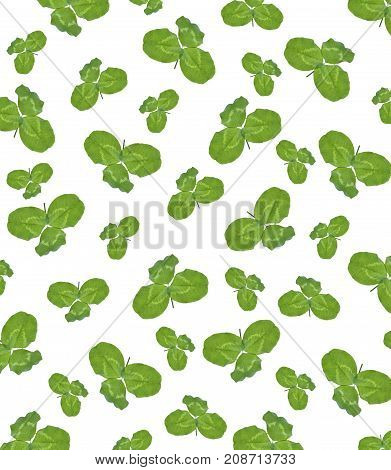leaf clover on white background. Green foliage. St.Patrick 's Day.
