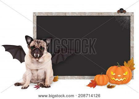 pug dog dressed up as bat for halloween with blank blackboard sign and pumpkins isolated on white background