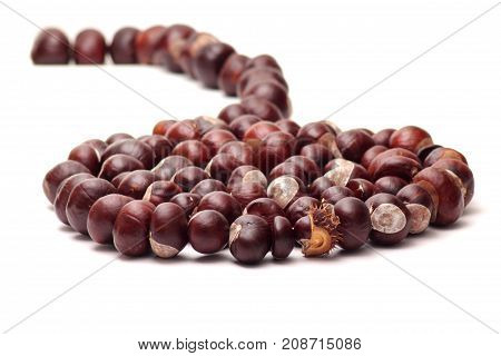 chain and spiral of chestnuts on white background - autumn/winter decoration - foreground and background blanked out blurry