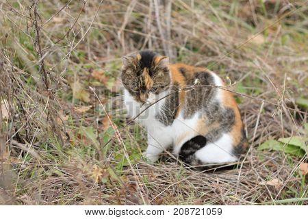 Wild cat autumn portrait.