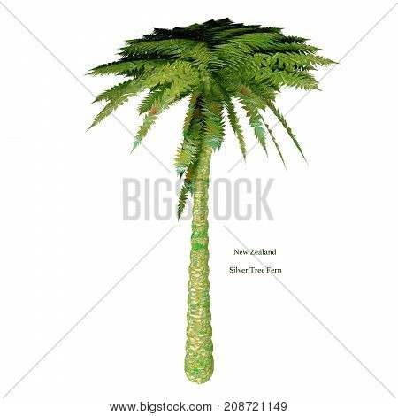 Silver Tree Fern with Font 3d illustration - The Silver Tree Fern is endemic to the main islands of New Zealand where it grows mostly in the subcanopy areas of drier forests and in open scrub.