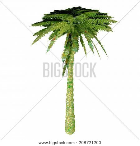 Silver Tree Fern 3d illustration - The Silver Tree Fern is endemic to the main islands of New Zealand where it grows mostly in the subcanopy areas of drier forests and in open scrub.