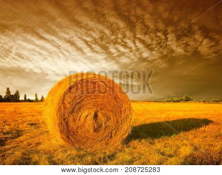 Hay bale in the countryside