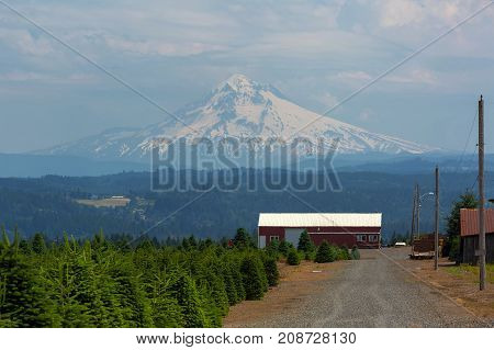 Mount Hood view at Christmas tree farm in Clackamas County Oregon