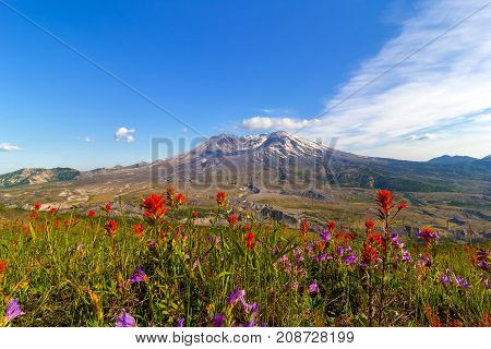 Wildflowers at Mount Saint Helens National Volcanic Monument in Washington State in summer