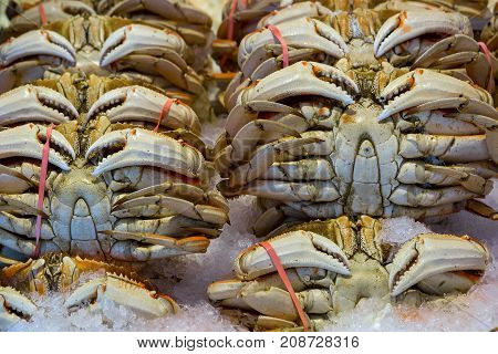 Wild Dungeness crabs on ice at fish stall in public wet market closeup