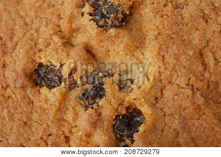 Delicious oatmeal cookie with raisins, closeup