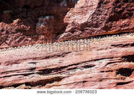Closeup Of Flock Of Gannet Birds And Black Guillemots Perched On Bonaventure Island Cliff In Perce,