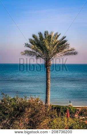 MESSILA, KUWAIT - SEPTEMBER 3, 2015 - A single palm tree in front of The Gulf Sea on September 3, 2015, in Kuwait.