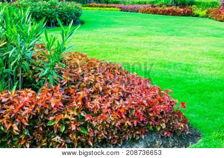 Blurred image, Green lawn, the front lawn for background, garden landscape design