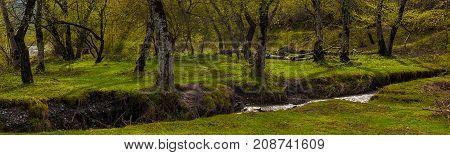 Green spring forest, first green grass after snow