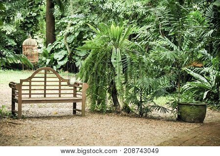 Wooden chair in the garden, Fresh green leaves on background in the garden sunlight. Texture of green leaves, Fern leaf in Forest. Garden and Green wall.