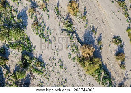 Desert Brush In Dry Wash
