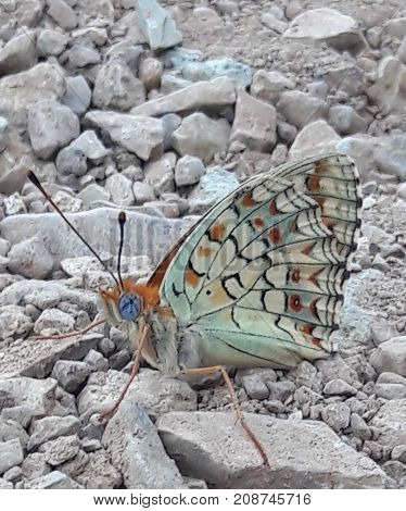 beautiful butterfly with blue eyes on the rocks.