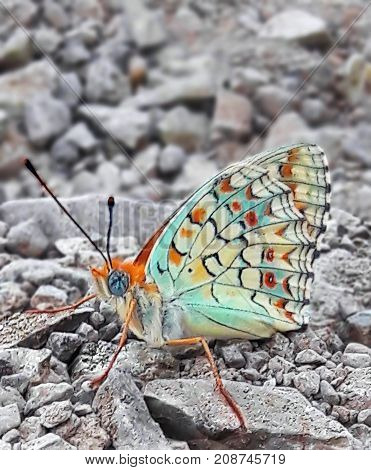 beautiful butterfly with blue eyes on the rock.