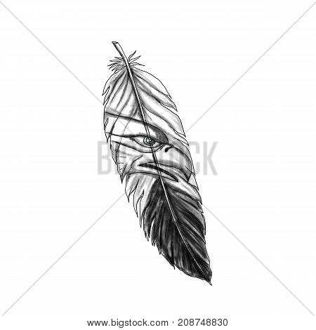 Tattoo style illustration of a feather with sea eagle seahawk or eagle bird head design on isolated background.