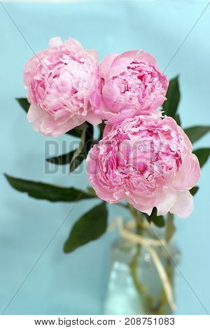 Blossoming Peony Flowers In A Bouquet Of Gently Pink Color Stand In A Vase With Water On A Blue Back