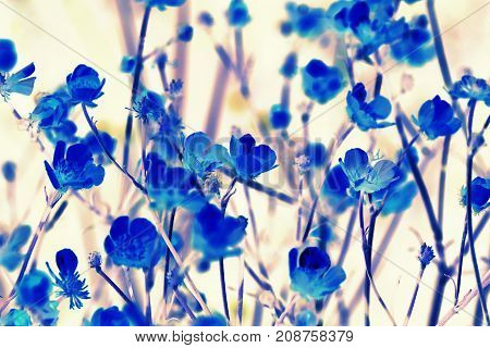 backdrop texture of colorful blue floral leaves .