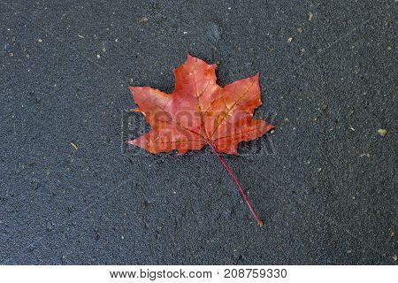 Red maple leaf on the road view from above
